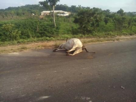 Herdsmen auto crash1
