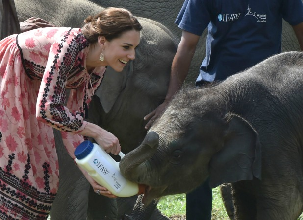Kate feeding animals