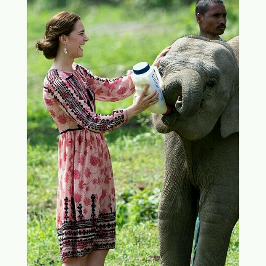 Kate feeding animals1