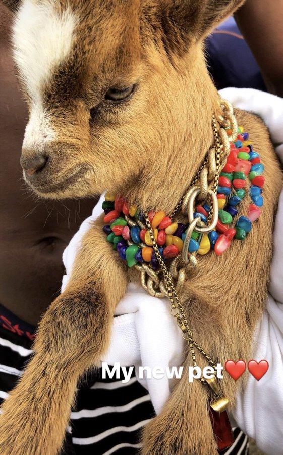 Wizkid flaunts new pet goat