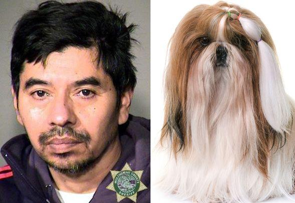 Man Rapes Dog
