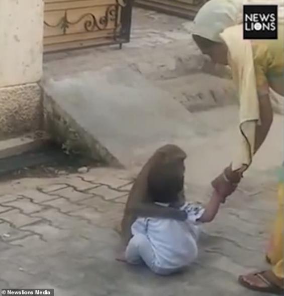 Monkey kidnaps 2-year-old boy