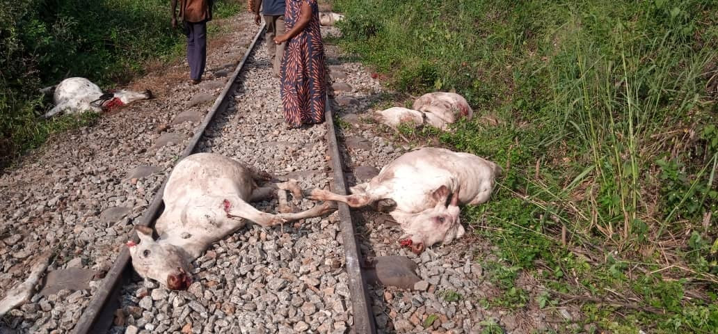 Train kills