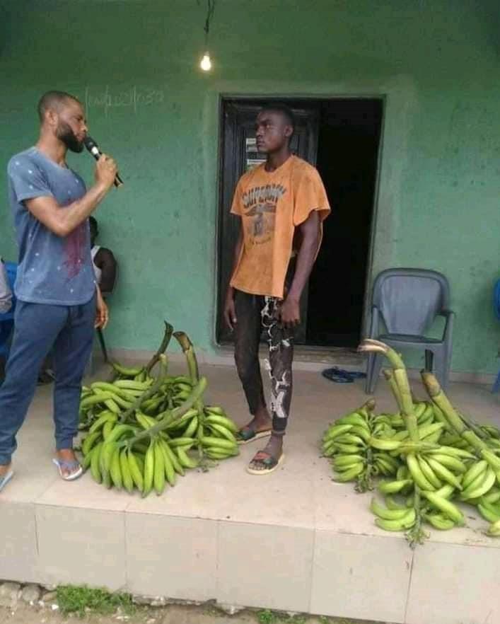 Plantain thief caught